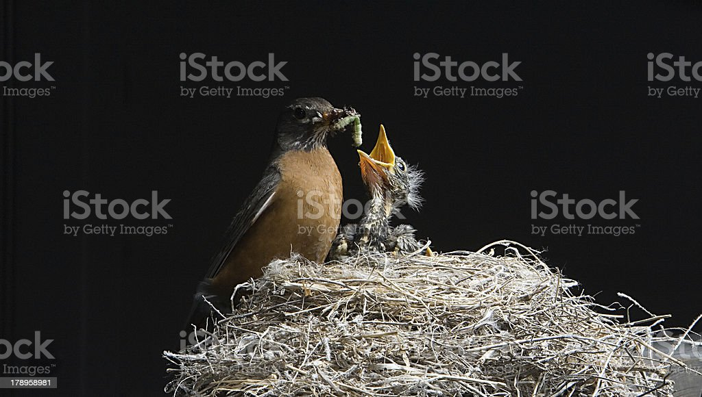 Early bird gets the worm royalty-free stock photo