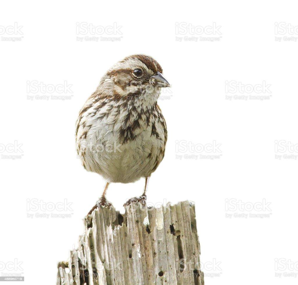 Early Bird stock photo