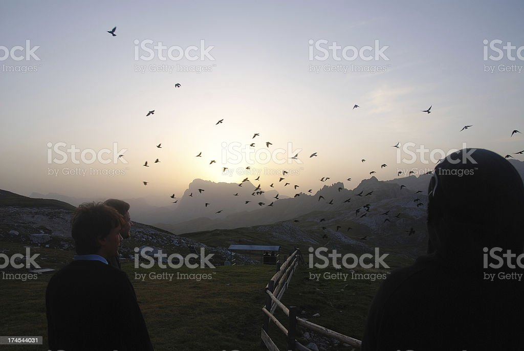 early birds at sunrise on alp royalty-free stock photo