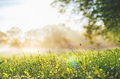 Early misty morning on a wild meadow / shallow DOF
