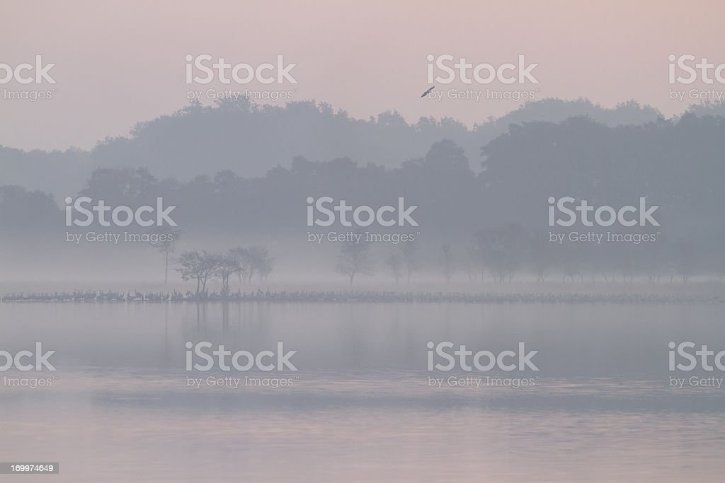 Early morning at a lake, Mueritz National Park, Germany royalty-free stock photo