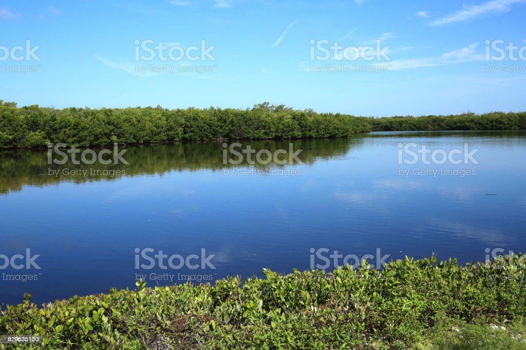 Early morning at Ding Darling on Sanibel Island, Florida, USA stock photo