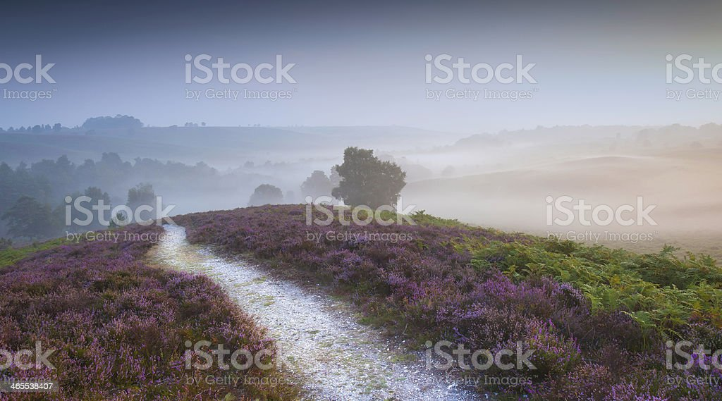 Early Morning Autumn Mist and Heather New Forest stock photo