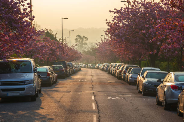 Early morning, cherry blossom on Muswell Hill, London stock photo