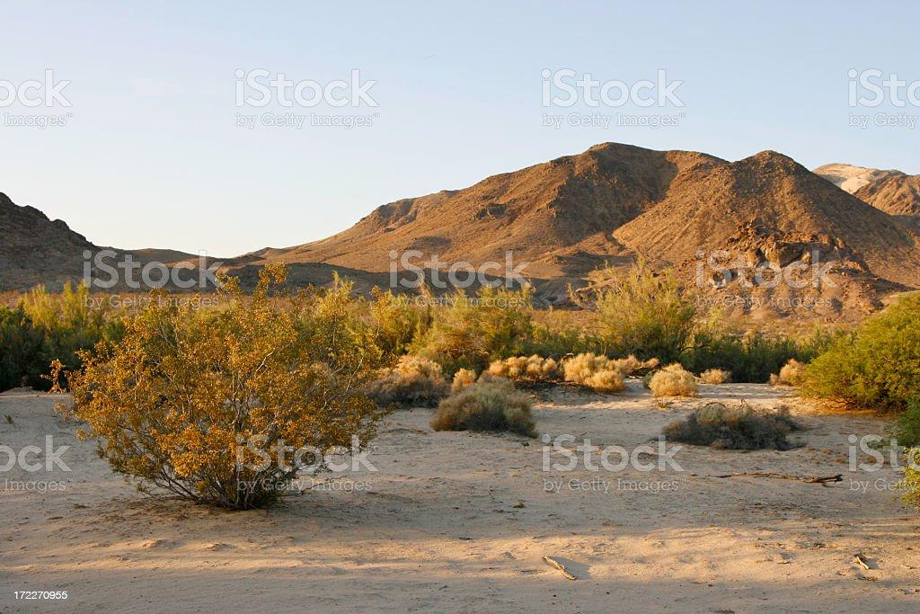 Early Morning Desert royalty-free stock photo