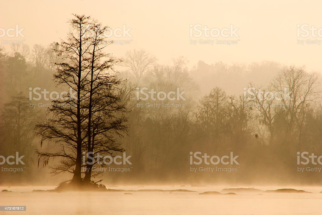 Early morning fog on Savannah river stock photo