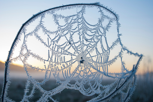 early morning fog,frost in the field,frost on green plants,spring background of fog and frost,cobwebs in the frost