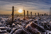 istock Early Morning Frost 697172804
