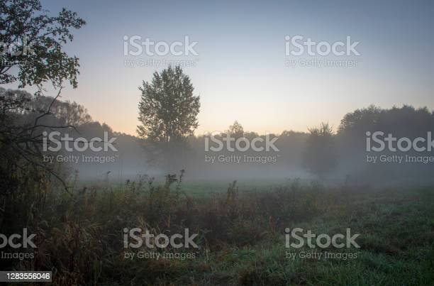 Photo of Early morning in Kampinos National Park, Warsaw, Poland