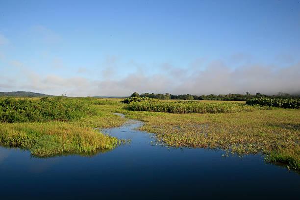 Am frühen Morgen in Kaw-Roura National Nature Reserve, französische Guina – Foto