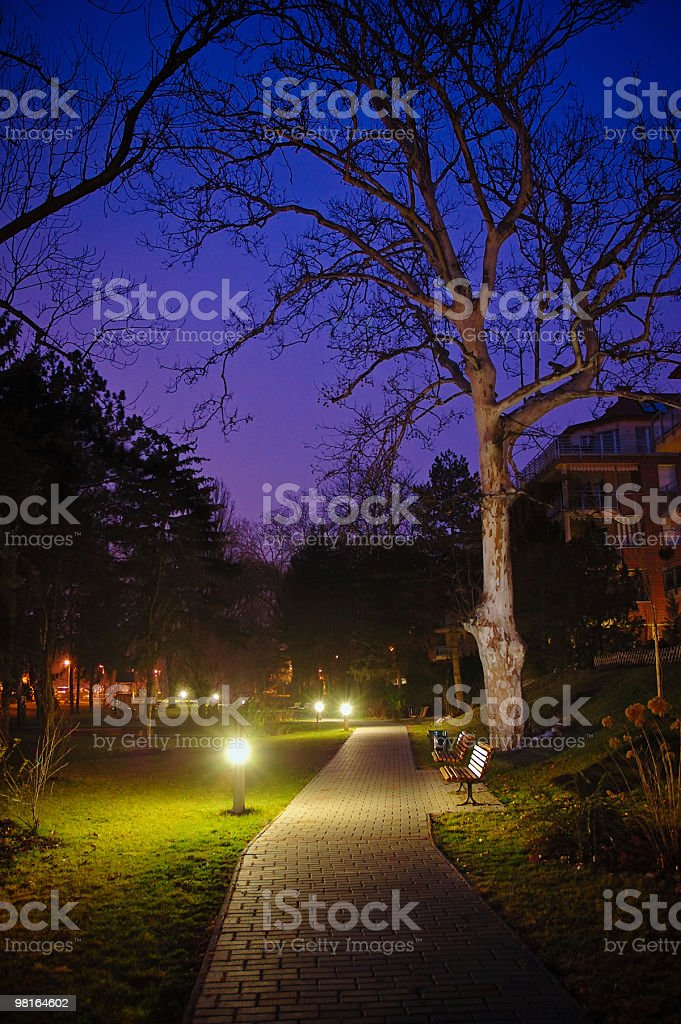 Early morning in the garden royalty-free stock photo