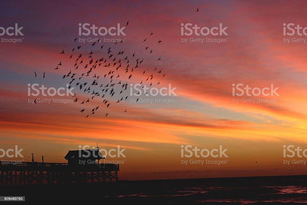 Early Morning Joys stock photo