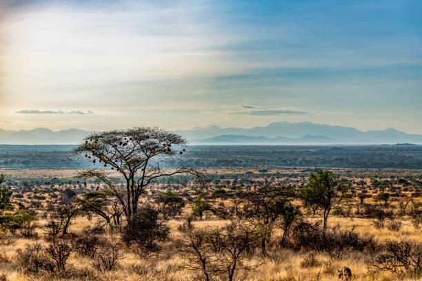 am frühen morgen landschaft, samburu national reserve, great rift valley, kenia. - afrikanische steppe dürre stock-fotos und bilder