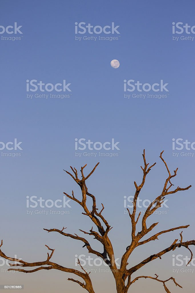 Early morning light on a dead tree stock photo