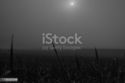 istock Early Morning Mist in Flanders 1135030058