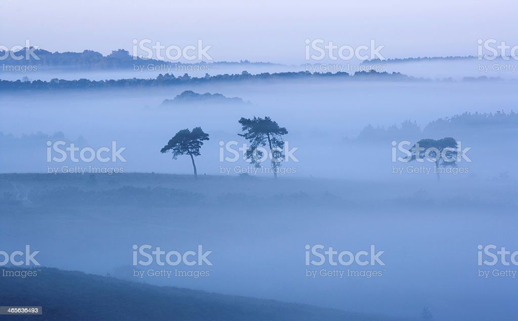 Early Morning Mist In Valley New Forest stock photo
