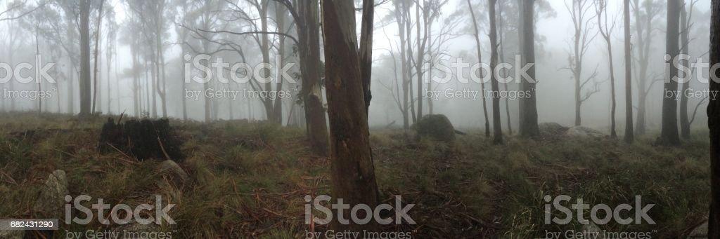 Brume matinale sur la piste de Beeripmo, Victoria photo libre de droits
