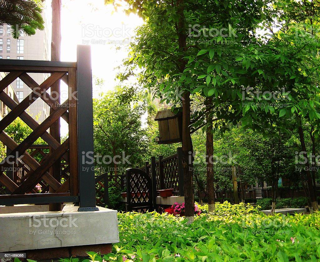 early morning of summer photo libre de droits