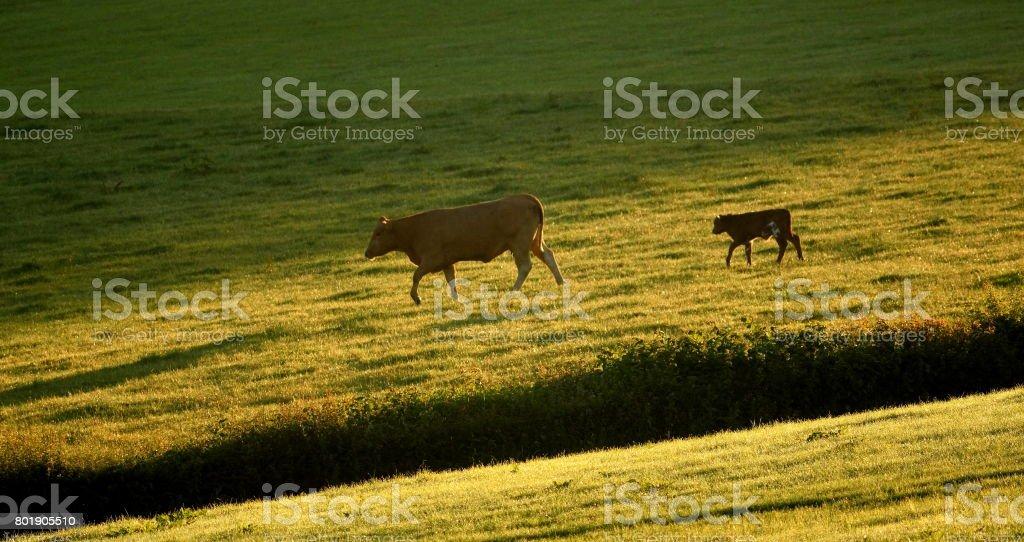 Early morning on farmland stock photo