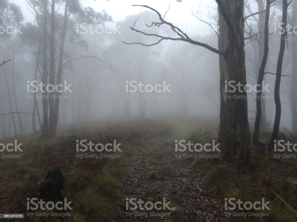 Early morning on the Beeripmo Track, Victoria royalty-free stock photo