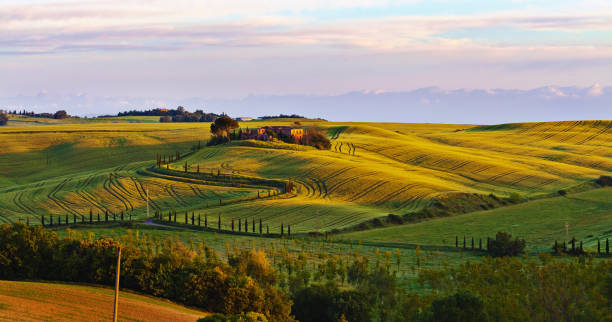 Early morning over curvy hills in Tuscany stock photo