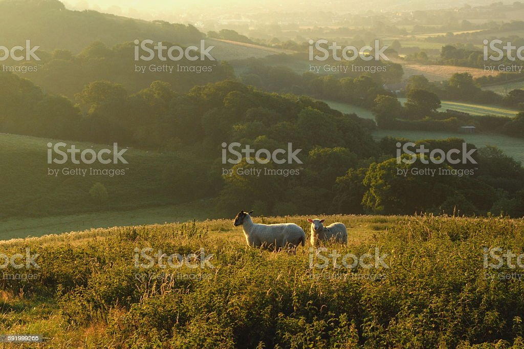 Early morning over Marshwood Vale stock photo
