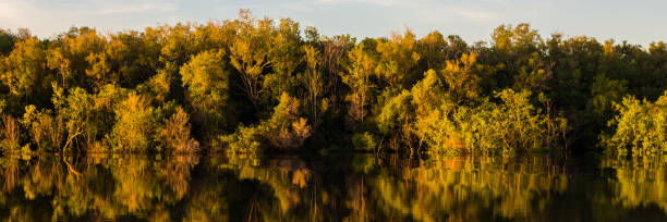 early morning reflection on the sampan river, nt, australia - janet k scott stock pictures, royalty-free photos & images