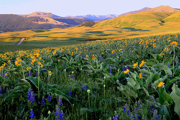 early morning rocky mountain front - montana western usa stock pictures, royalty-free photos & images