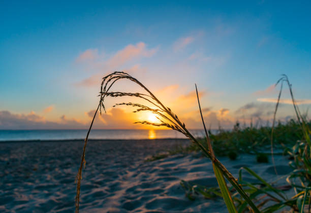 Early morning seagrass on a sand dune by the ocean stock photo