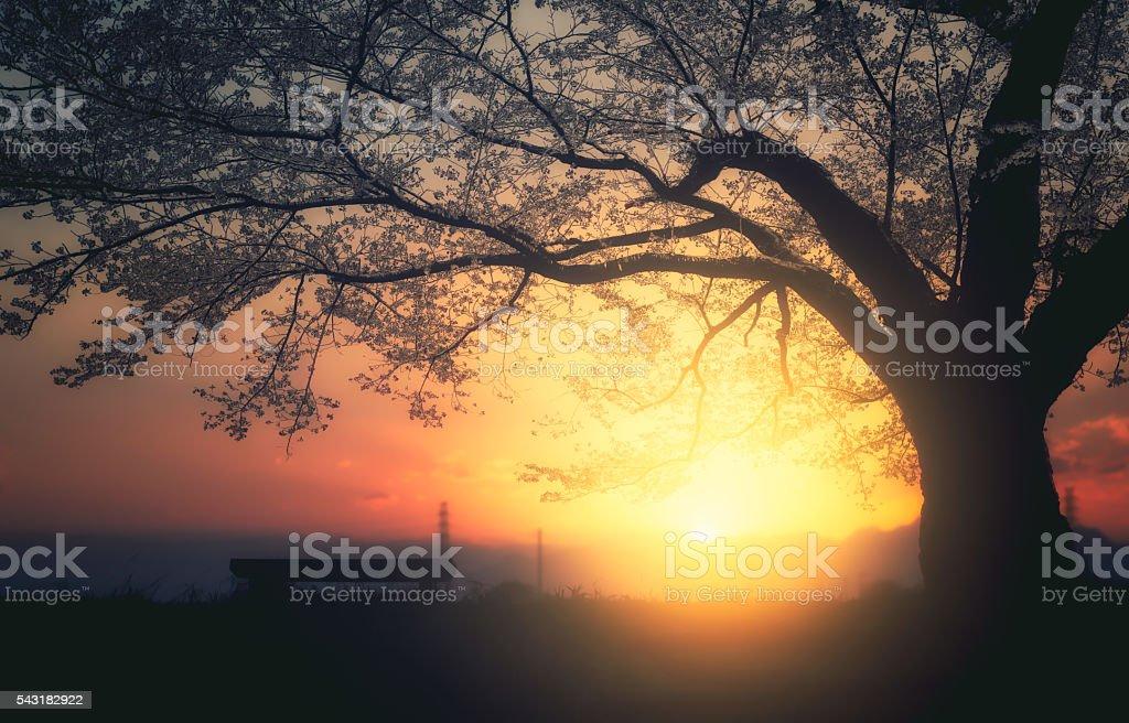 Early morning shower of light stock photo