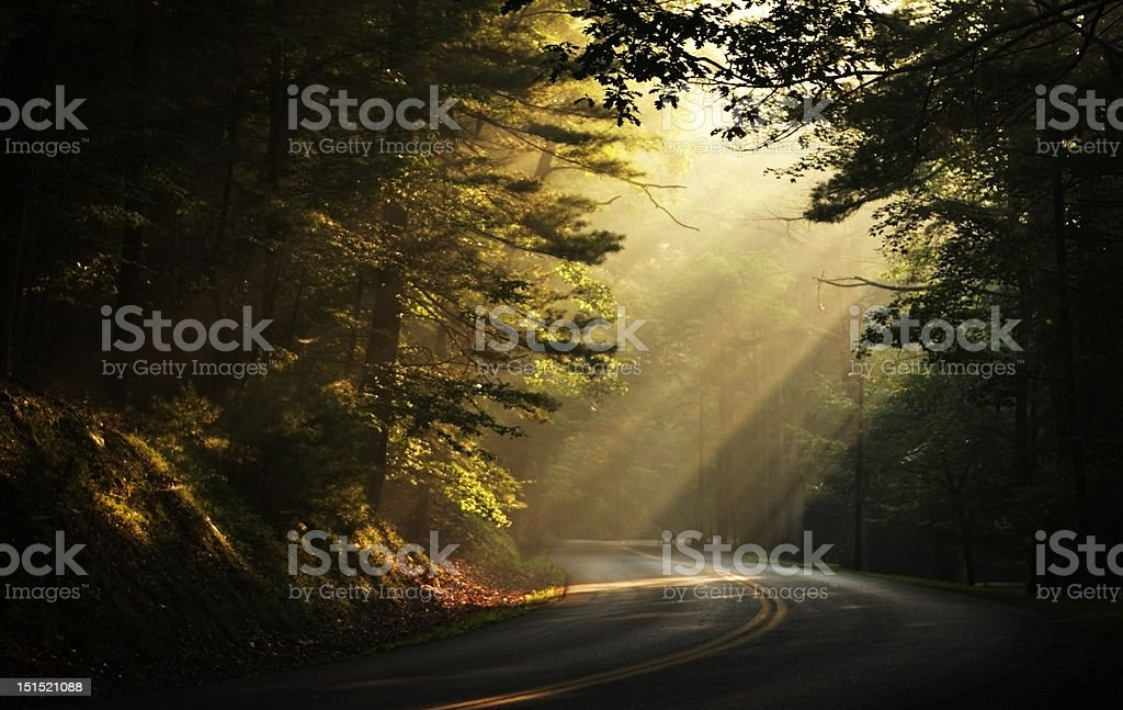 Early Morning Sunbeams in the Woods royalty-free stock photo