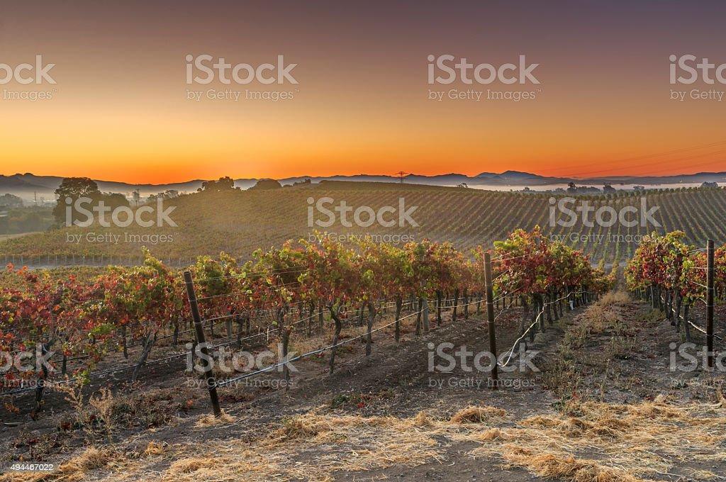 Napa Valley wine country mountain hillside vineyard at sunset