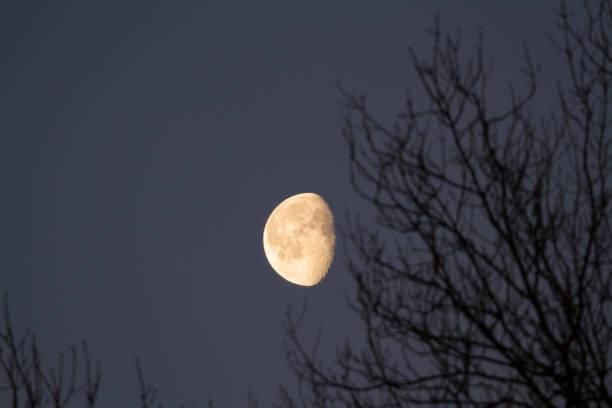 luna ceretta mattutina, rami - luna gibbosa foto e immagini stock