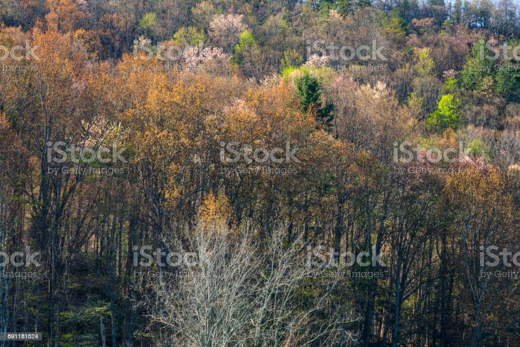 Early Spring Foliage, Wears Valley, Tennessee stock photo