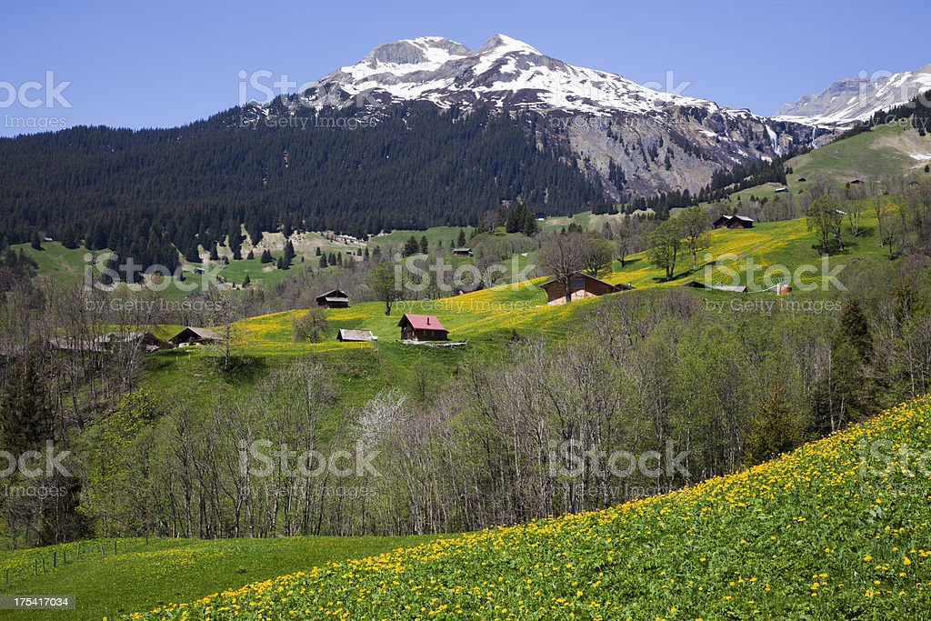 Early spring in the mountain royalty-free stock photo