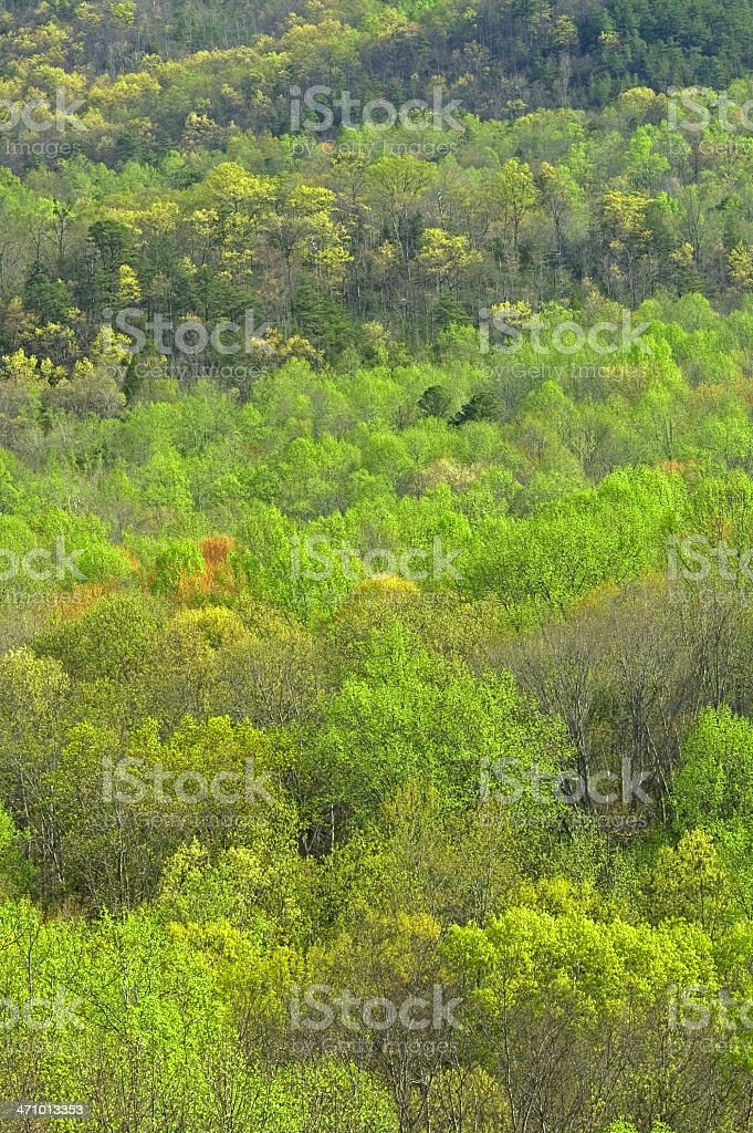 Early Spring Landscape, Great Smoky Mtns NP, TN royalty-free stock photo