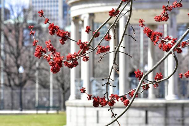 Early Spring on Boston Common stock photo