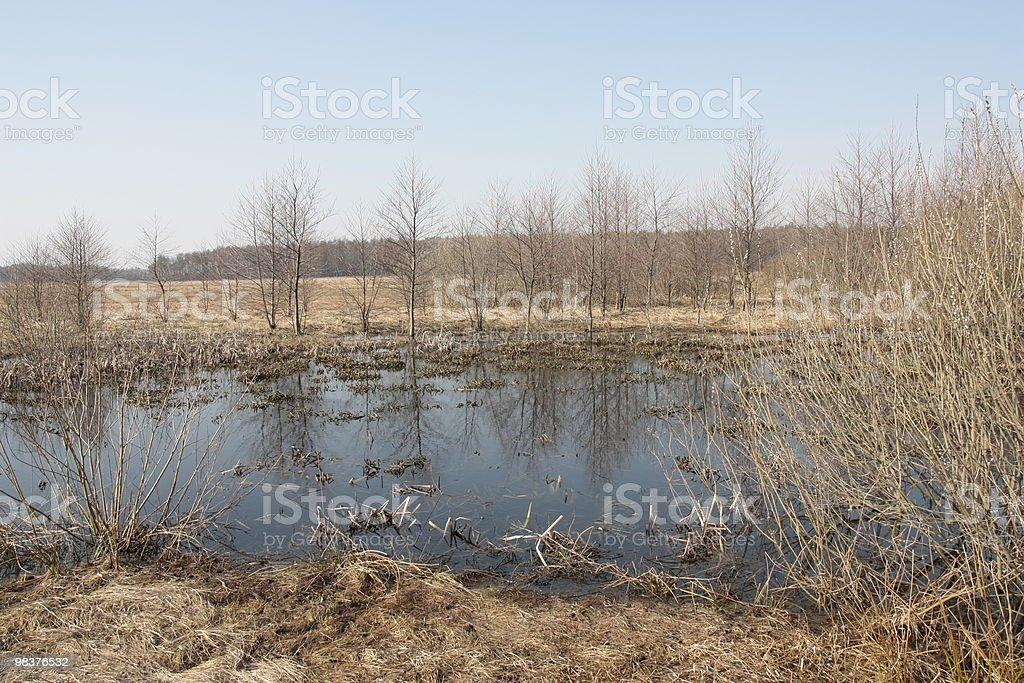 Early spring on the peat bog. royalty-free stock photo
