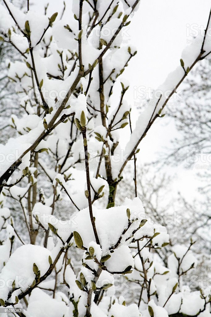 Early Spring Snow royalty-free stock photo