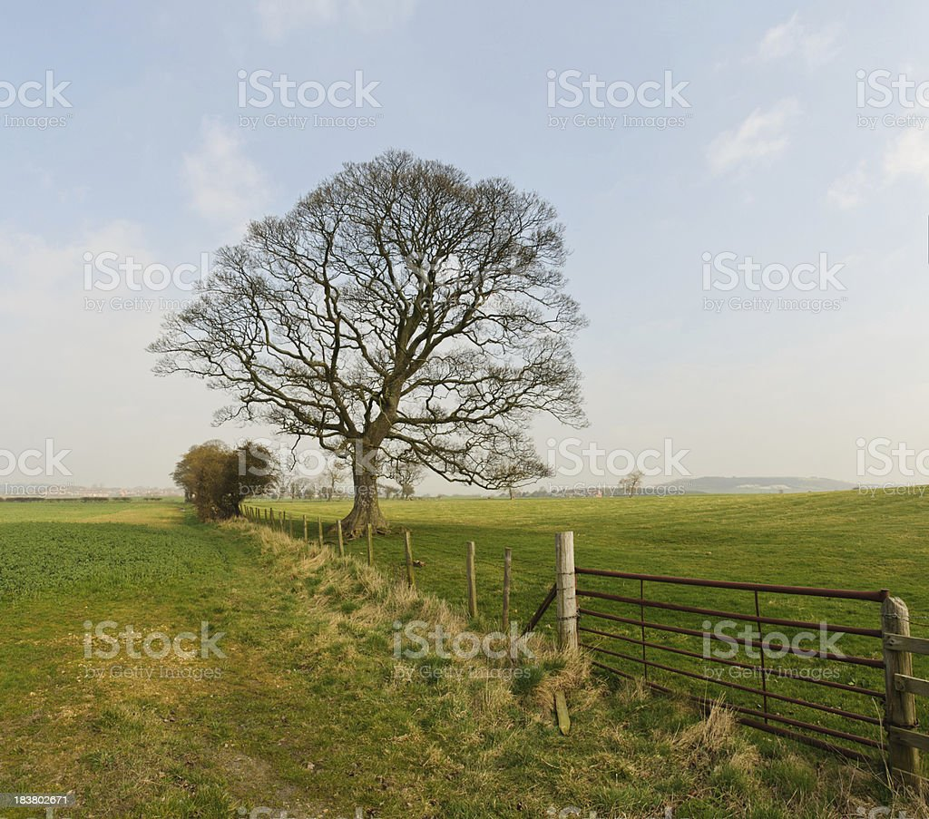 Early Spring Tree royalty-free stock photo
