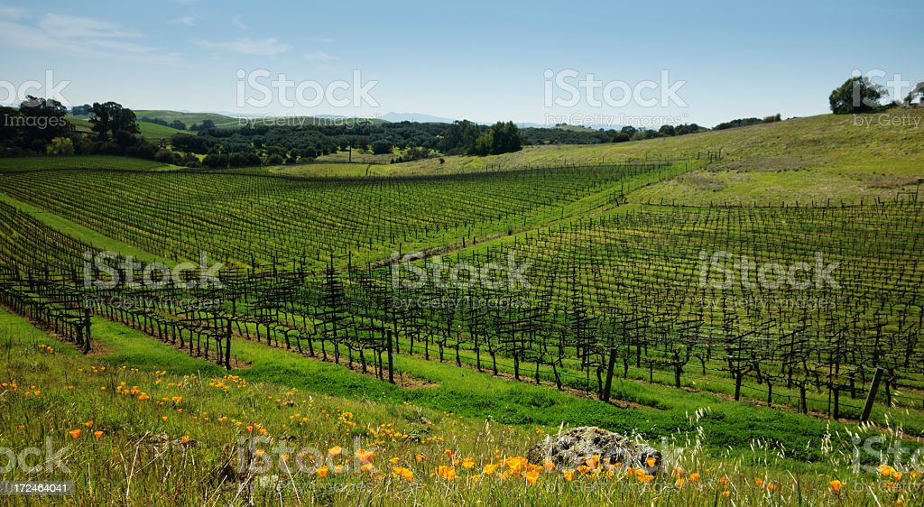 Early spring vineyard royalty-free stock photo