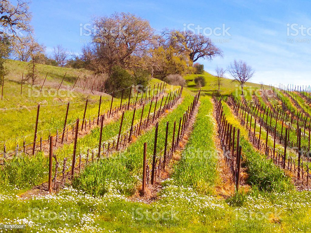 Early Spring  Wine Country Sonoma County California stock photo