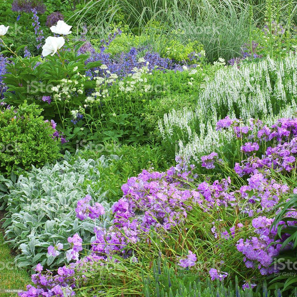Early summer flower garden - IV stock photo