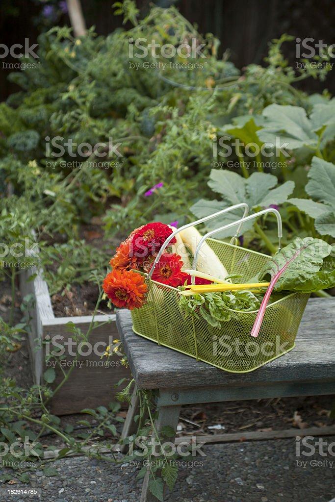 Early Summer Garden royalty-free stock photo