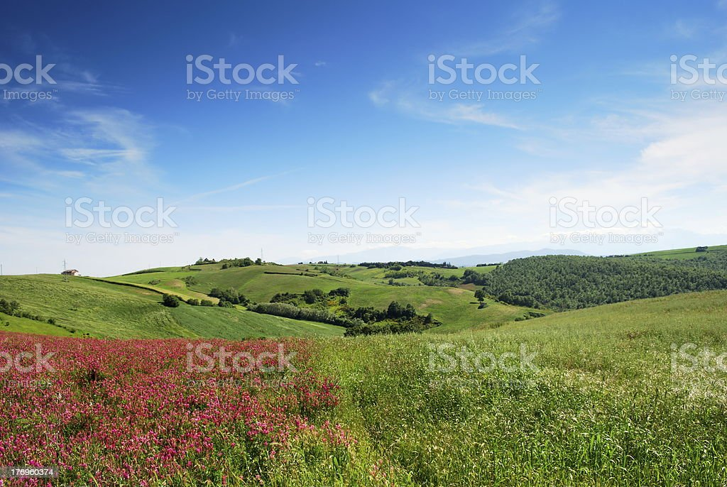 Early summer landscape stock photo