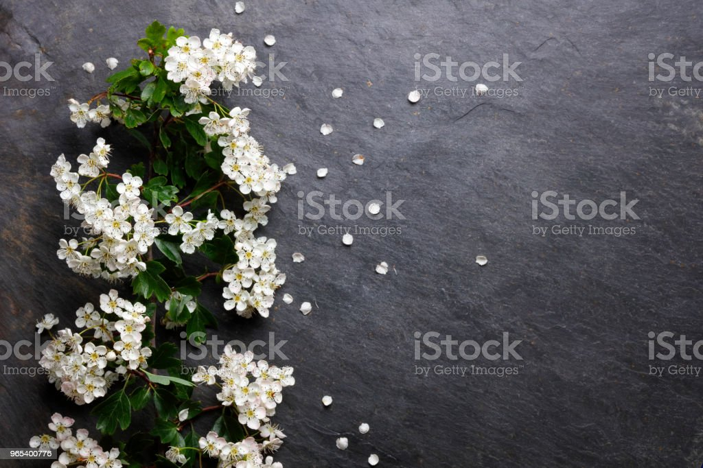 Early summer white  flower blossoms on slate royalty-free stock photo