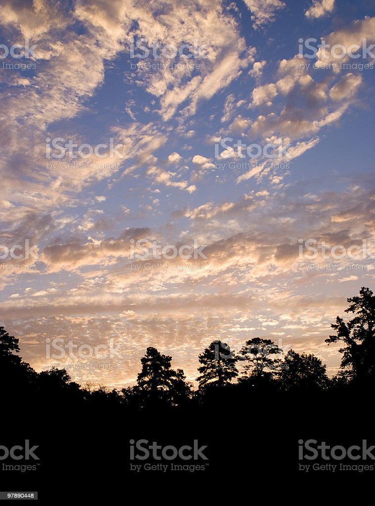 Early to Rise - portrait royalty-free stock photo