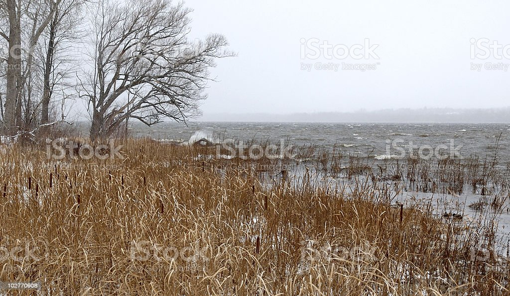 Early winter at the river's edge. stock photo