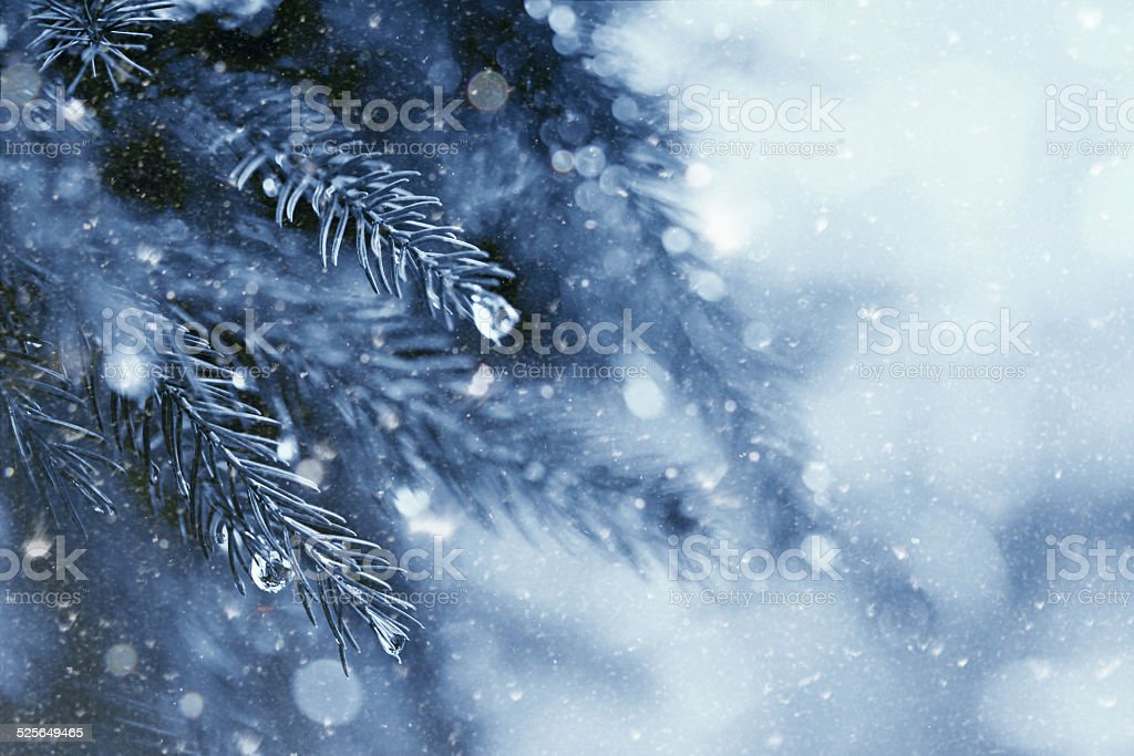 early winter in the forest, abstract natural backgrounds stock photo