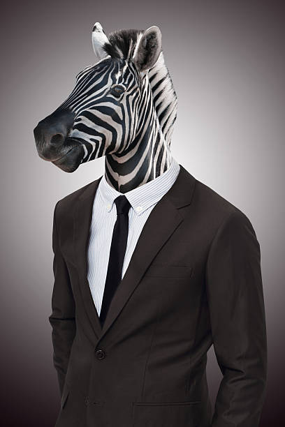 earn your stripes in the corporate jungle - zebra stock photos and pictures